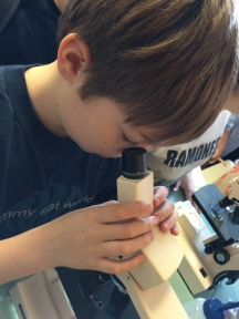 Making observations using a high-powered microscope.